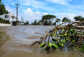 Branch Broken by Flood Waters in the Suburbs